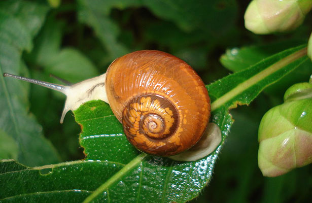 Snail Eating Food